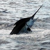 Casa de Campo offers Fishing packages